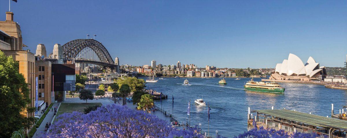 Lente in Sydney, Jacaranda in bloei